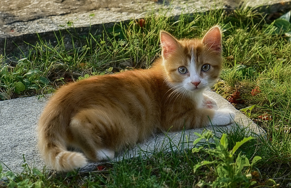 инструкция гамавит для кошек