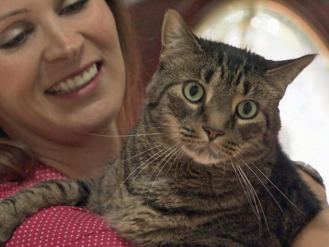 Дексаметазон для кошек инструкция по применению уколы
